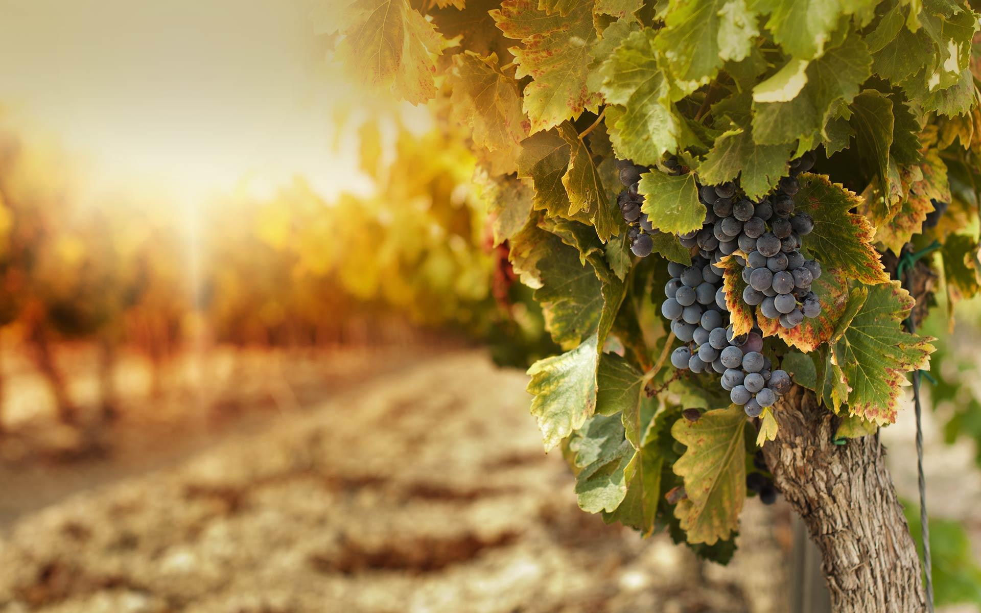 Vinařství v srdci Jižní Moravy